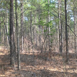 A forest understory one year after understory treatment has been applied.